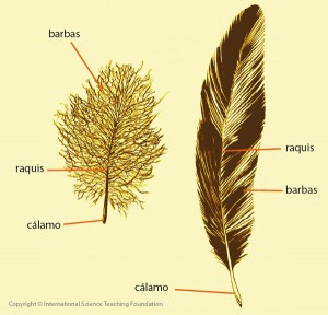 feathers_low_es